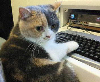 cat2452.1212243331