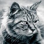 【WildCatSniper】今週のトレードまとめ(5/29~6/2)【ZigzagBreakoutEA】